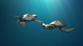 Une histoire de tortues